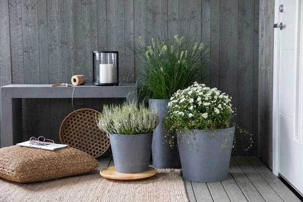 Tre potter med hvite blomster på en platting foran inngangsdøren