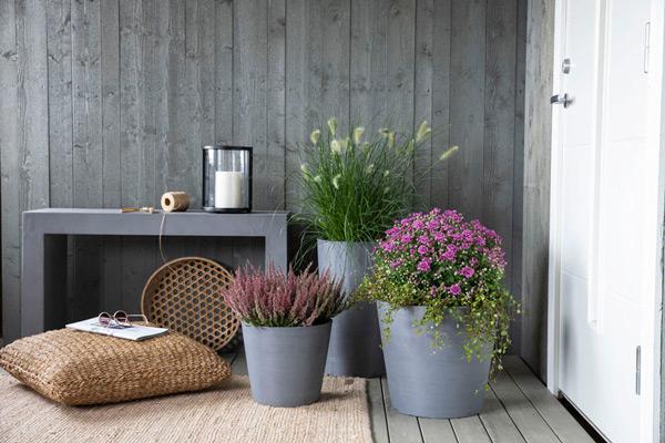 Tre potter med lilla blomster på en platting foran inngangsdøren